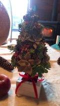 多肉植物のクリスマスツリーキッド2014(根なし)