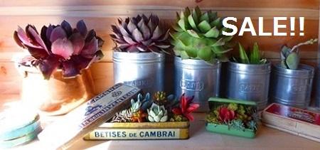 アンティーク雑貨と多肉植物