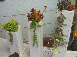 画像1: 寄せ植えセット・トール木鉢