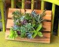 多肉植物のタブロー(壁掛け)・キッド(根なし)