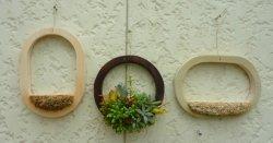 画像1: 多肉植物のタブロー(mini輪)・キッド(根なし)