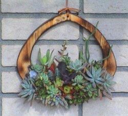 画像1: 多肉植物のタブロー(輪)・キッド(根なし)